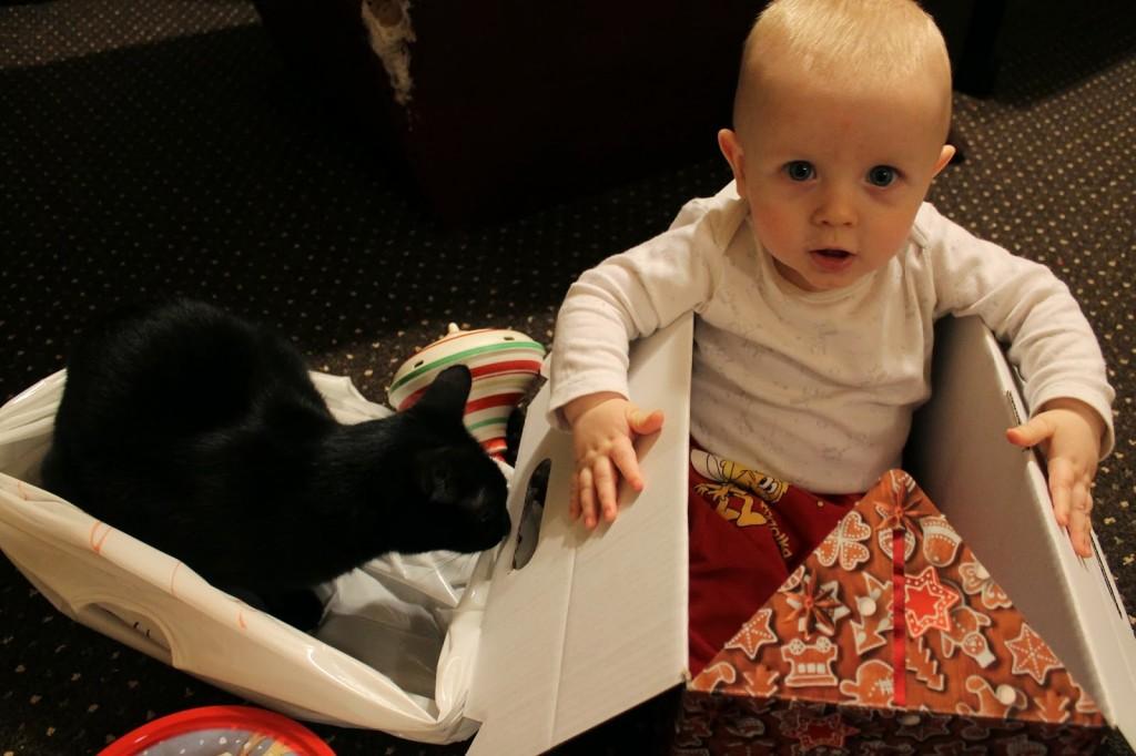 dzieci i koty
