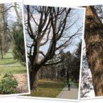 Park w Świerklańcu okiem Anci 1.04.2014
