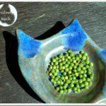 Jak uzyskać nasiona kolendry?