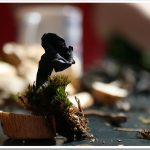 Lejkowiec dęty czyli polski grzybek mung