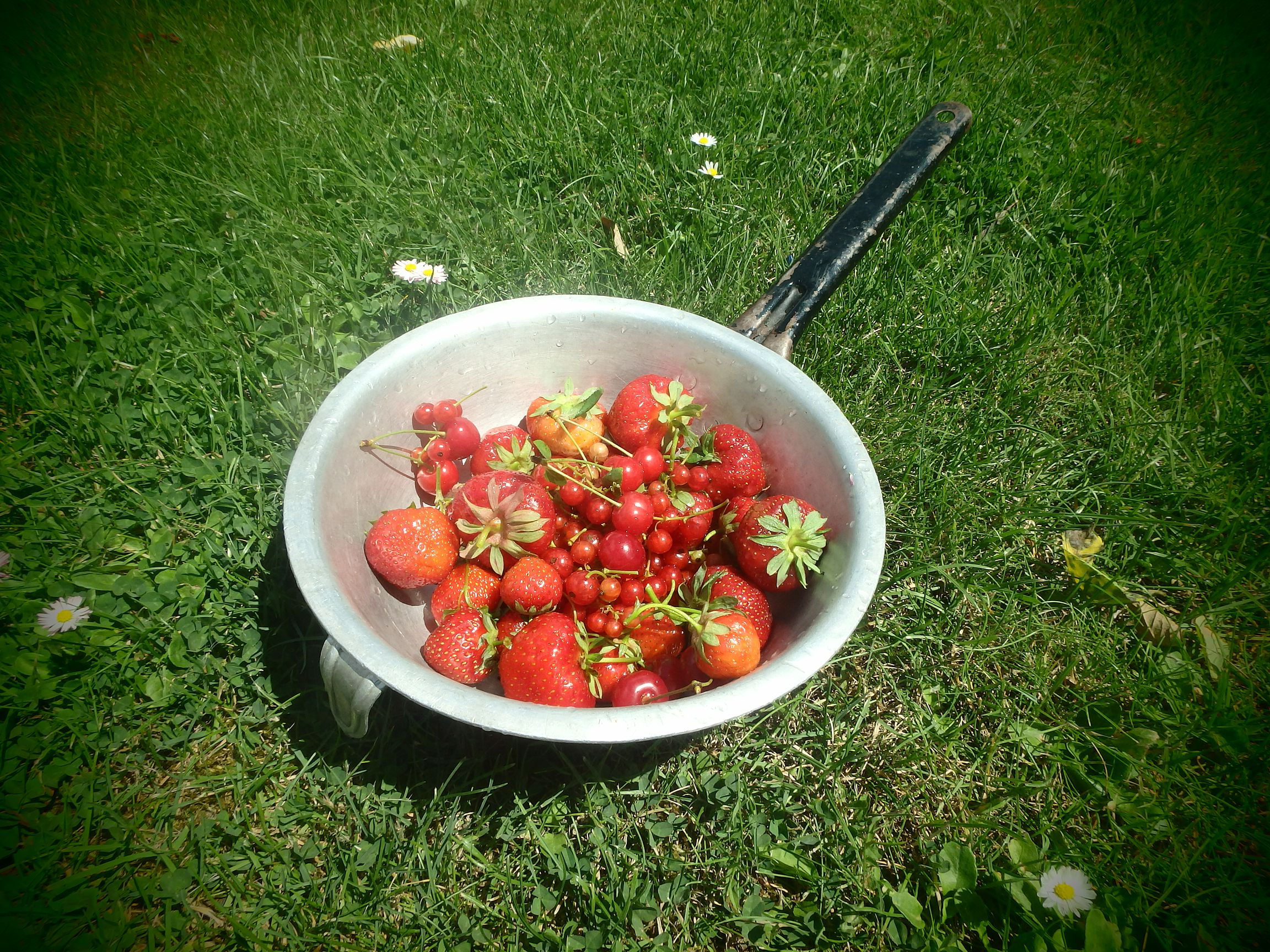 owoce ogrodowe