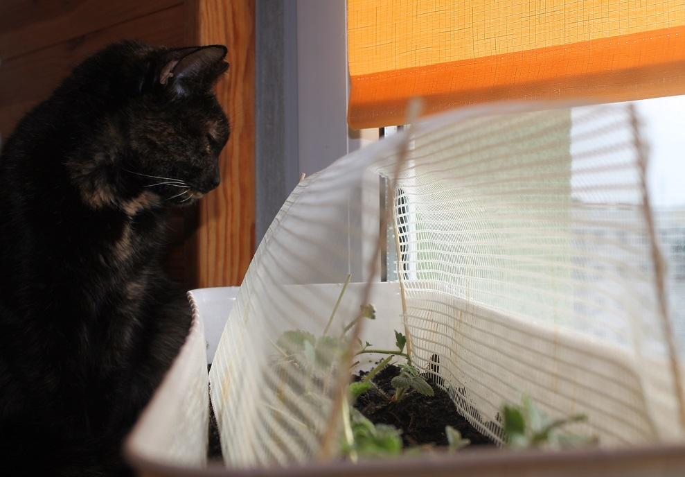 Siatka chroniąca młode rośliny przed kotami