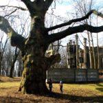 Atrakcje dla dzieci. Park Ludowy i Pałac Tiele-Wincklerów w Bytomiu.