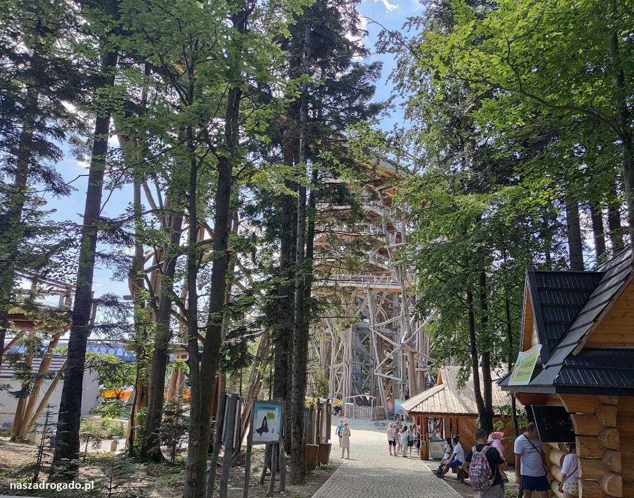 wieża widokowa scieżka w koronach drzew Krynica Zdrój