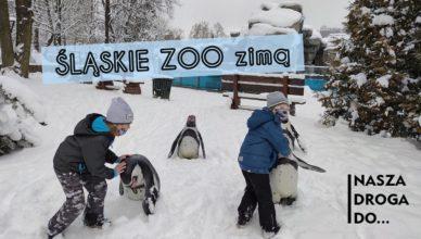 Śląskie Zoo zimą w Chorzowie - nasza droga do
