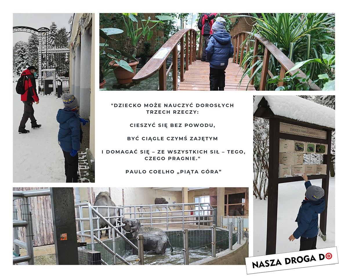 śląskie zoo w zimie - naszadrogado
