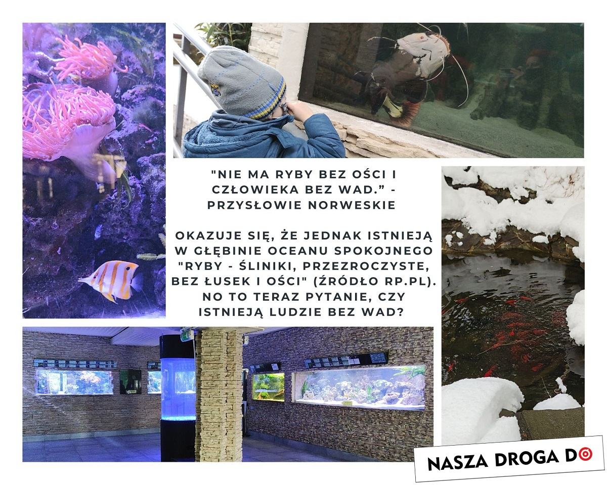śląskie zoo w zimie - nasza droga do